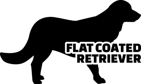 Flat Coated Retriever silhouette real with word Illusztráció