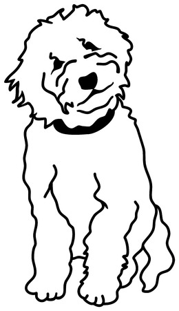 Goldendoodle silhouette sitting in white