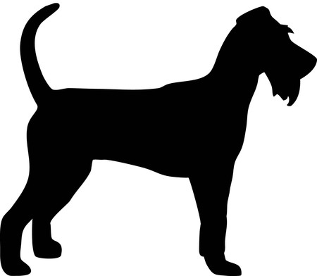 Irish Terrier silhouette real in black Illustration