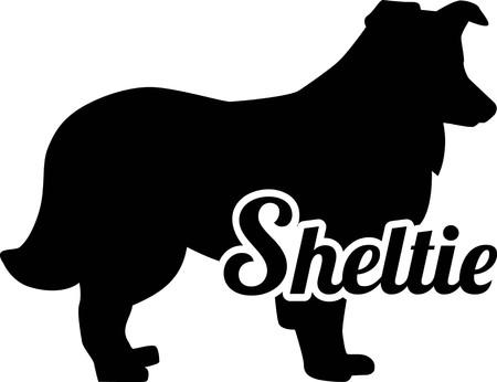 Shetland Sheepdog Sheltie silhouette real with word Illustration
