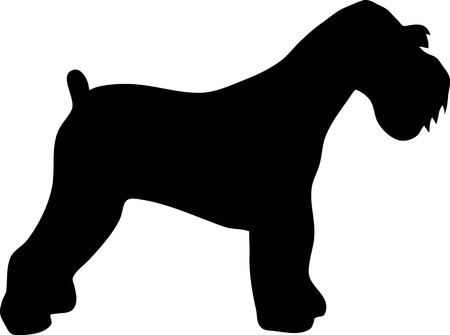 Miniature Schnauzer silhouette real in black Ilustracja