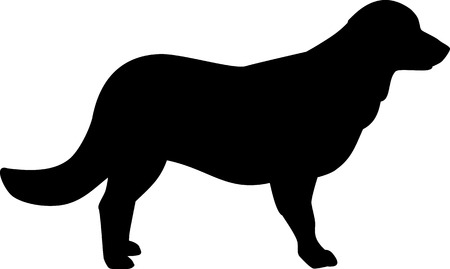Flat Coated Retriever silhouette real in black