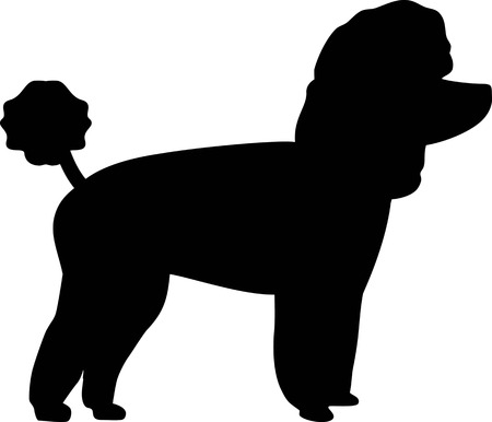 Toy poodle silhouette real in black Stock Illustratie