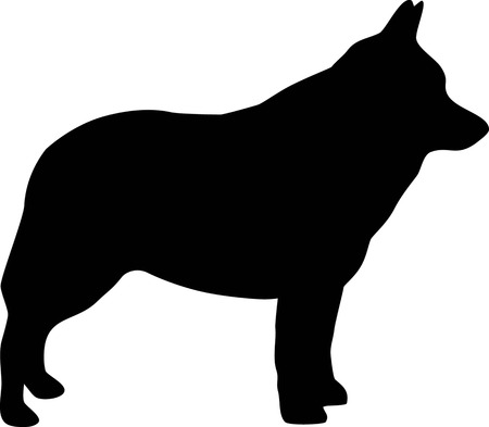 Schipperke silhouette real in black Ilustrace