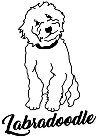 Labradoodle silhouette white with name Ilustrace