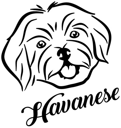 Havanese head name Ilustrace