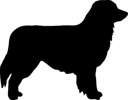 Australian Shepherd silhouette in black