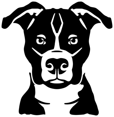 Staffordshire Bull Terrier head black and white