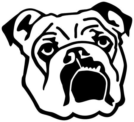 English Bulldog face black and white Illustration
