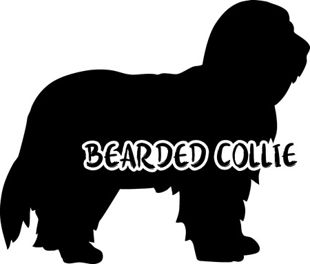 Bearded Collie dog silhouette real with word Illustration