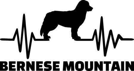 Heartbeat pulse line with Bernese Mountain dog silhouette