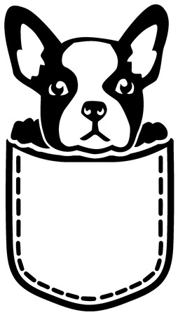 Französische Bulldogge in der Tasche