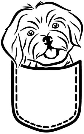 Havanese dog in a pocket Illustration