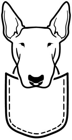 Bull terrier in a pocket