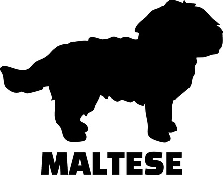 Maltese silhouette in black and white