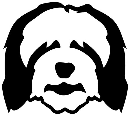 Bearded Collie dog head in black and white