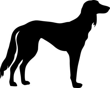 Saluki dog silhouette real in black