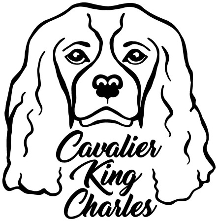 Cavalier King Charles head black with name