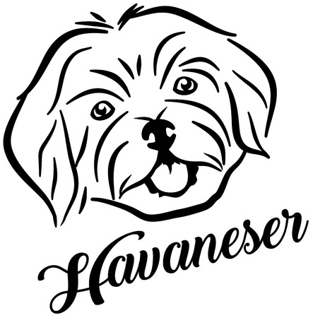Havanese face with german word Illustration