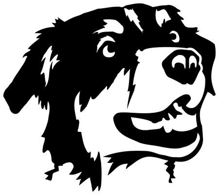 Cabeza de pastor australiano en blanco y negro