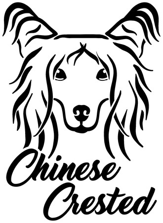 Chinese Crested head black with breed name