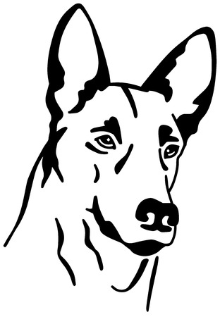 Malinois head in black and white