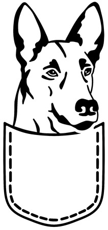 Malinois in a pocket black and white Illustration