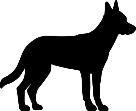 Malinois in Schwarz mit Silhouette Vektorgrafik