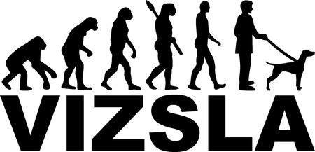 Vizsla evolution with dog name