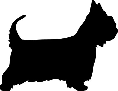 Australian Silky Terrier in black with silhouette Illusztráció