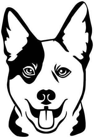 Australian Cattle Dog head in black and white