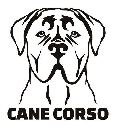 Tête Cane Corso en noir et blanc