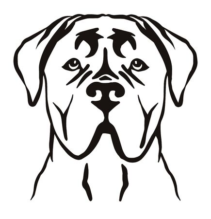 Cane Corso head in black and white