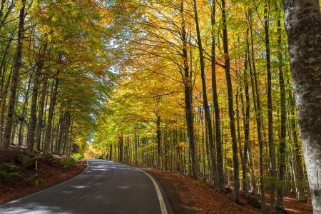 Beech forest in Monte Amiata
