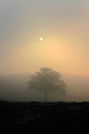 Lonely tree in foggy sunset photo