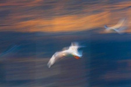 Abstract flying seagull