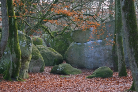 Forest of Fontainebleau Stock Photo