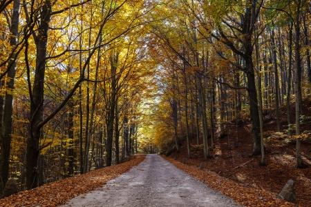 foglie: Road under autumnal trees