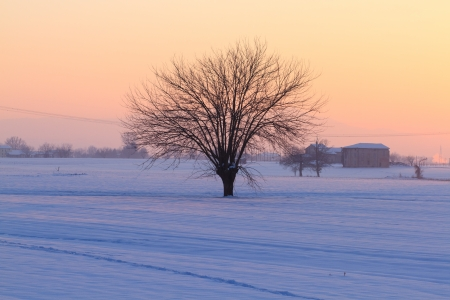 Isolated tree in winter landscape Stock Photo