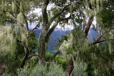 Tropical rainforest in Reunion Island