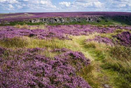 Summer time in the Peak District National Park