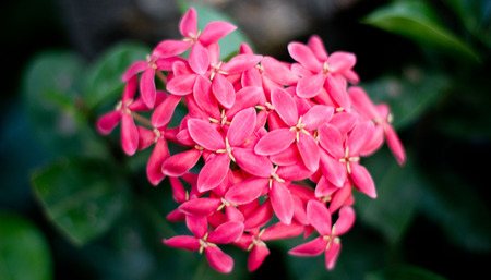 comparable: Red Plumeria good-looking  Comparable to similar pretty girl for You