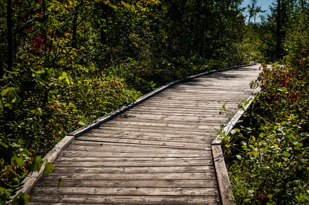 Valens Conservation, Dundas, Ontario, Canada, August 13, 2017, Wood boardwalk through marshland, 2017.