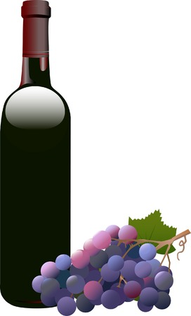 vino: Bottle of red wine, Bordeaux shape, and a bunch of red grapes. Illustration