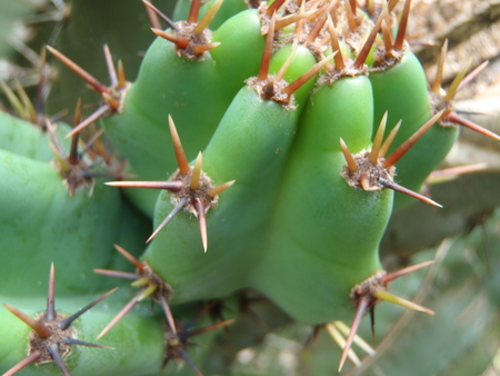 Close up of a green cactus plant Stock Photo