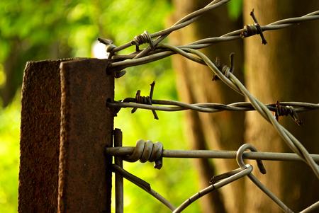 wire fence: Der Rest eines Zaunes im Waldgebiet