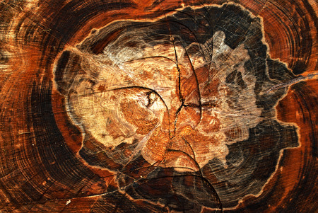 Die Jahresringe des alten Baumes 版權商用圖片