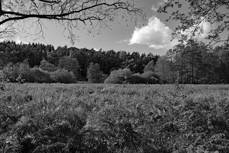 Ein Sumpfgebiet im Herbst Stock Photo - 88610936