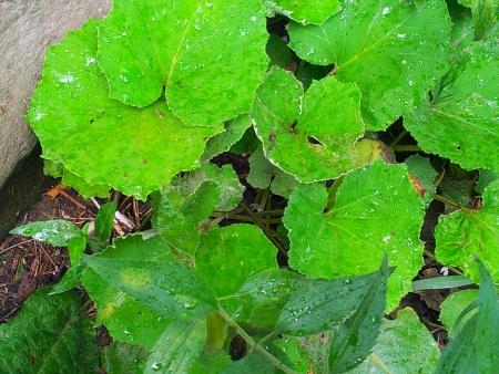 濡れた葉 写真素材 - 14698425