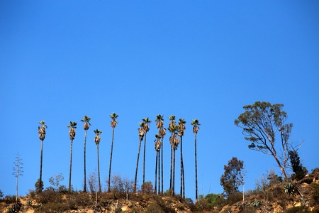 griffith: Trees on a hiking trail in Griffith Park, California